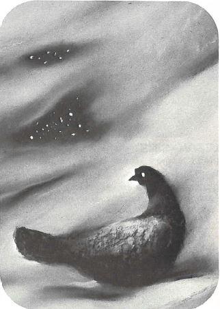 La Poulette grise